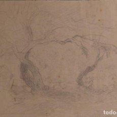 Arte: JAIME PAHISSA Y LAPORTA (1846-1928) DIBUJO A LÁPIZ ÁRBOLES FIRMADO. Lote 116351203