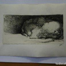 Arte: PERRO TUMBADO. TINTA SOBRE PAPEL. 32 X 24 CM.. Lote 147481286