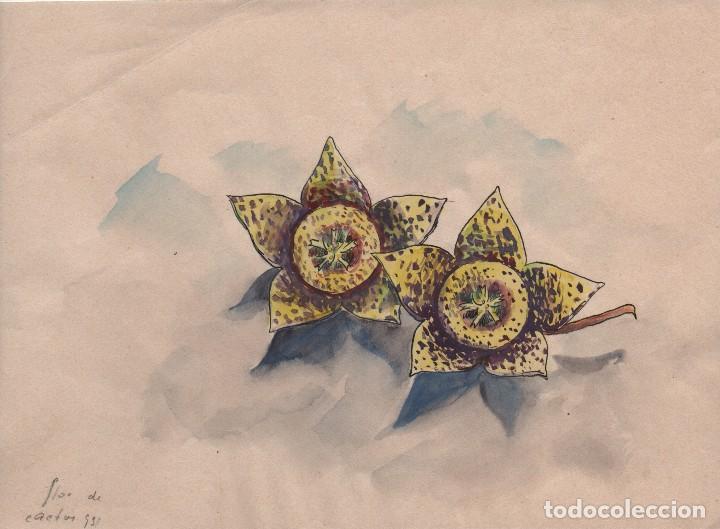 Arte: Dibujo /acuarela sobre papel de E. C. Ricart. 1931 Flor de cactus. - Foto 2 - 111916707