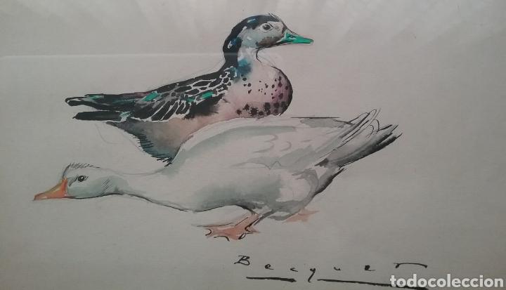 Arte: Dibujo en acuarela de Carlos Bécquer Domínguez 1889- 1968 de patos. - Foto 2 - 153241002