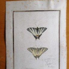 Arte: DIBUJO NATURALISTA DEL S. XVIII. MARIPOSA CHUPALECHE O PODALIRIO. CARL LINNAEUS 1758. Lote 168237336