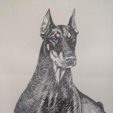 Arte: DIBUJO PLUMILLA DÓBERMAN FIRMADO MONTERO. Lote 168596920