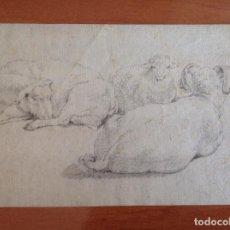 Arte: ANÓNIMO SIGLO XVIII. OVEJAS.. Lote 169714208