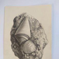 Arte: FOSSIL3 - DIBUJO ORIGINAL, FIRMADO. A4. 29.5X21 CM.. Lote 176760247