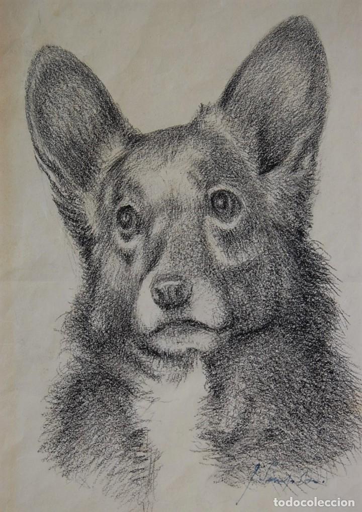 Arte: Colección de Perros - 1930's: Pastor Alemán, Golden Retriever, Corgi, Boxer y Spaniel - Foto 5 - 181467122