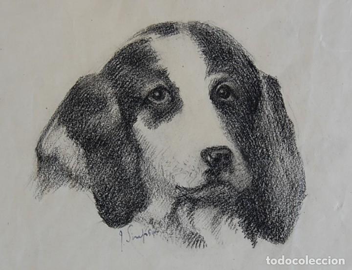 Arte: Colección de Perros - 1930's: Pastor Alemán, Golden Retriever, Corgi, Boxer y Spaniel - Foto 9 - 181467122