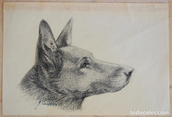 Arte: Colección de Perros - 1930's: Pastor Alemán, Golden Retriever, Corgi, Boxer y Spaniel - Foto 11 - 181467122