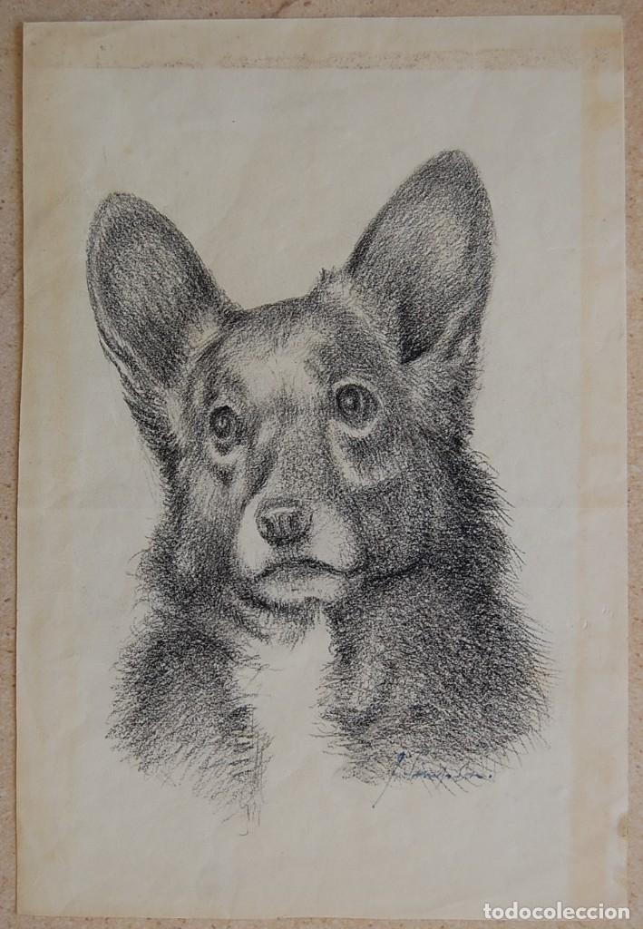 Arte: Colección de Perros - 1930's: Pastor Alemán, Golden Retriever, Corgi, Boxer y Spaniel - Foto 13 - 181467122