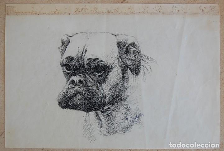 Arte: Colección de Perros - 1930's: Pastor Alemán, Golden Retriever, Corgi, Boxer y Spaniel - Foto 14 - 181467122