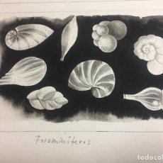 Arte: ORIGINAL DE P.MONNERAT (1917-2006), FIRMADO Y SELLADO. Lote 183292292