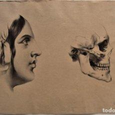 Arte: ESTUDIO CABEZA MUJER Y CRÁNEO - 49 X 32 CM - MARIA DE LOS ÁNGELES VERDÚ - FIN. SIGLO XIX PRINC XX. Lote 183558736