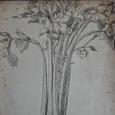 Arte: DIBUJO ANTIGUO A PLUMILLA FIRMADO CON SELLO CON LAS LETRAS E.S.K.EN PAPEL . ( ESCUELA INGLESA ). Lote 185743622