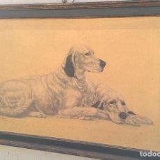 Arte: PAREJA DE PERROS DE RAZA EN DIBUJO IMPRESO. Lote 189179156