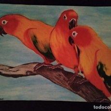 Arte: DIBUJO HIPERREALISTA. COTORREANDO (TM). D. NAVASCUES.. Lote 194323355