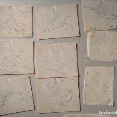 Arte: 12 DIBUJOS DE AVES EXÓTICAS, PÁJAROS, APUNTES LÁPIZ. Lote 195183221