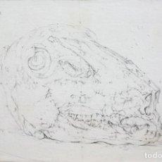 Arte: AGNUS PICTURA II. Lote 195242520