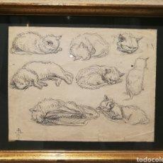 Arte: ESTUDIOS DE GATOS POR LUIS DE MADRAZO (1825-97). Lote 200558766