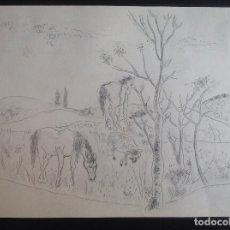 Arte: ANÓNIMO. CABALLLOS EN EL CAMPO. OCASIÓN.. Lote 204060102