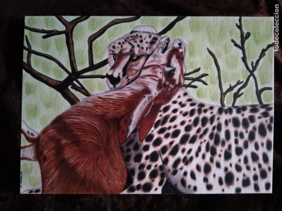 DIBUJO HIPERREALISTA. (ANIMALES VARIOS). *GUEPARDO; EL GRAN CAZADOR*.(TM). DE D. NAVASCUÉS (Arte - Dibujos - Contemporáneos siglo XX)