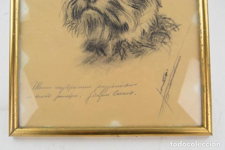Arte: Perro, dibujo al carboncillo, con dedicatoria, firma ilegible, con marco. 31x23,5cm - Foto 2 - 234448410