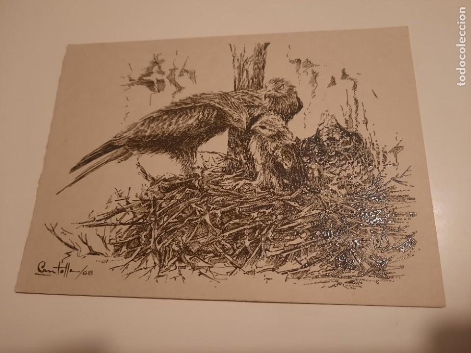 LAMINA PINTADA .FIRMADO POR CANTOLLA /68 (Arte - Dibujos - Contemporáneos siglo XX)
