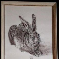 Arte: DIBUJO A TINTA / *JOVEN LIEBRE *. AÑO 1502. AUTOR; ALBERTO DURERO. (COPIA). Lote 206905181