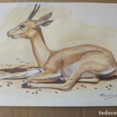 Arte: GACELA - DIBUJO ORIGINAL A ACUARELA, FIRMADO.30X21,5CM -A4. MUCHO MEJOR EN MANO!. Lote 262152450
