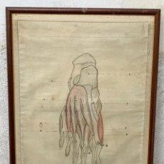 Arte: DIBUJO ESCUELA ESTUDIO MEDICINA FARMACIA ANATOMIA PIE LEYENDA PPIO S XX 73X52CMS. Lote 266550623