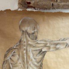 Arte: ORIGINAL OBRA DE B. GONZALEZ. ANATOMÍA. MEDIDAS 90*102 CM. Lote 269297803
