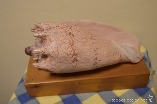 Arte: Figura caracola (13 cm alto x 26 cm ancho+peana) - Foto 2 - 60023107