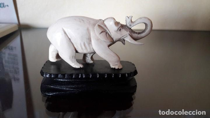 Arte: elefante de marfil con peana de madera, hindú, ppios de siglo XX - Foto 3 - 103908255
