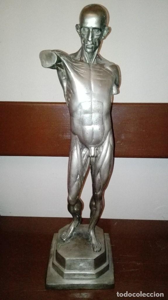 escultura antigua anatomia humana musculacion h - Comprar Esculturas ...