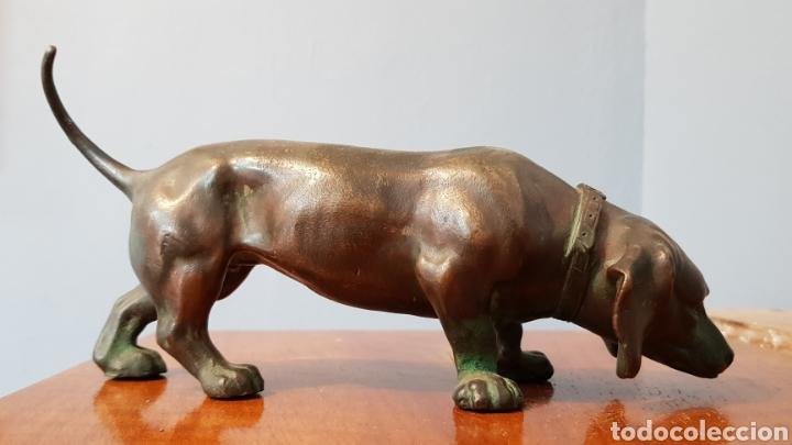 Arte: Escultura bronce antigua gran calidad de perro salchicha, sin firma. - Foto 4 - 159203288