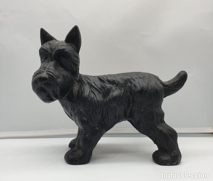 Arte: Escultura antigua de perro raza Westy en hierro con patina negra . - Foto 5 - 178339977