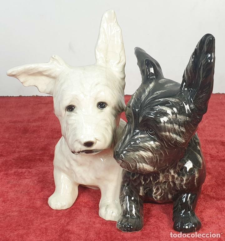 PAREJA DE CACHORROS DE FOX TERRIER. PORCELANA ESMALTADA. SIGLO XX. (Arte - Escultura - Porcelana)