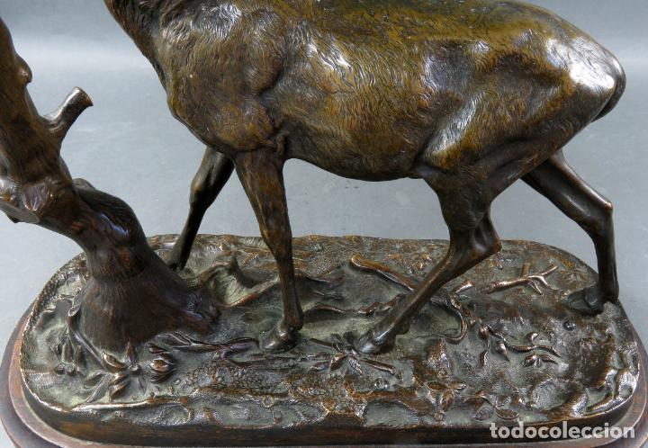 Arte: Escultura en bronce ciervo comiendo de rama de árbol Pierre Jules Mené Francia siglo XIX - Foto 8 - 183915395