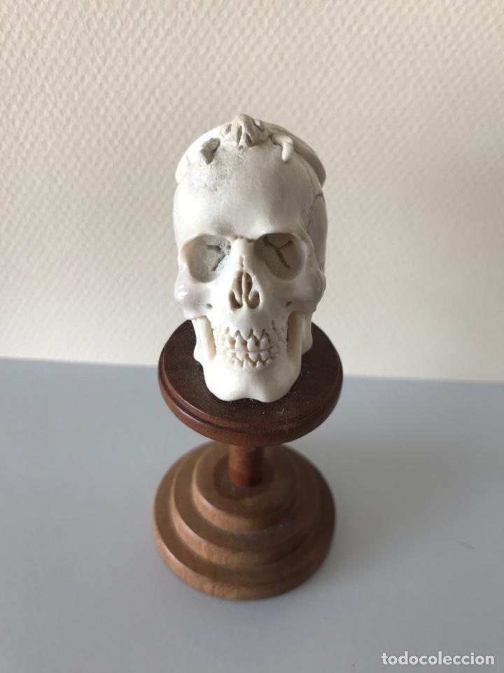 MEMENTO MORÍ. HUESO TALLADO Y BASE TORNEADA DE MADERA. MITAD SIGLO XIX (Arte - Escultura - Hueso)