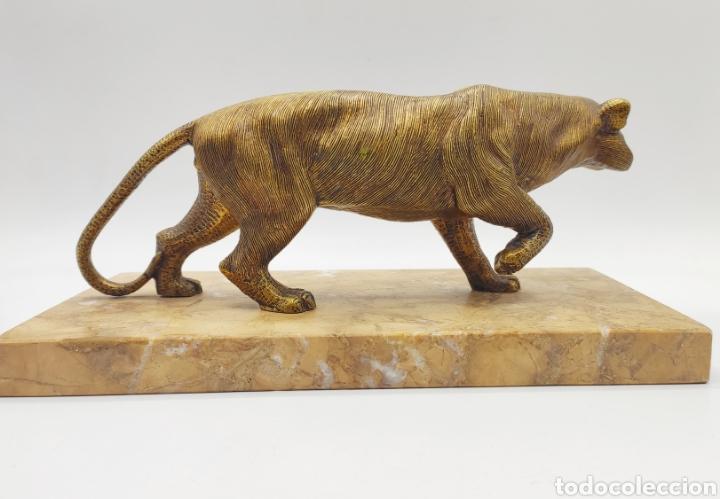 Arte: Escultura tigre en mármol y bronce. Años 30. - Foto 5 - 222121037