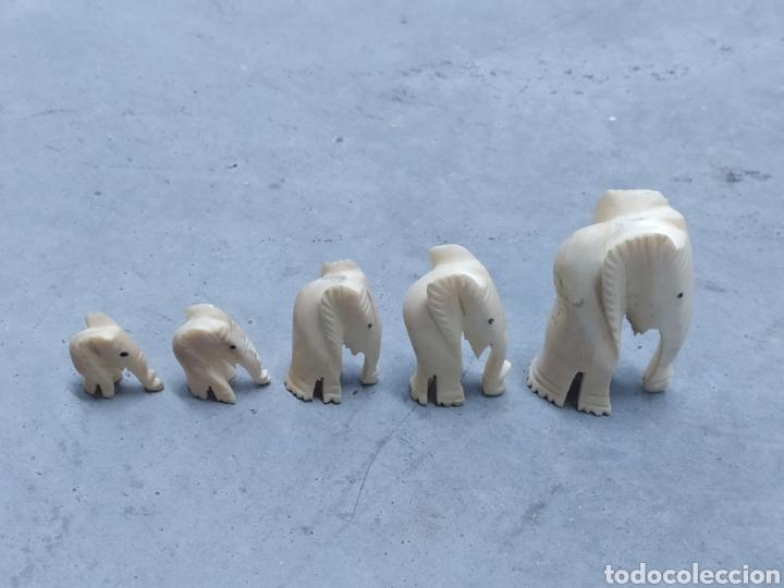 Arte: Conjunto de 5 elefantes tallados en Marfil. Años 60 - Foto 2 - 232878380