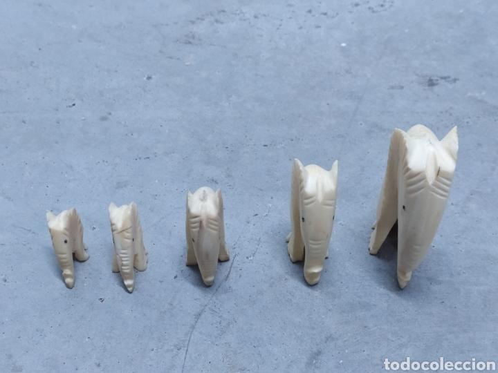 Arte: Conjunto de 5 elefantes tallados en Marfil. Años 60 - Foto 4 - 232878380