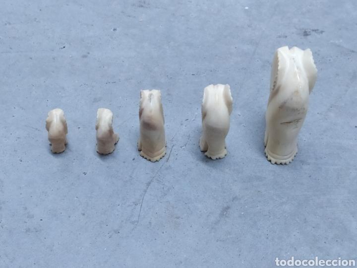 Arte: Conjunto de 5 elefantes tallados en Marfil. Años 60 - Foto 5 - 232878380