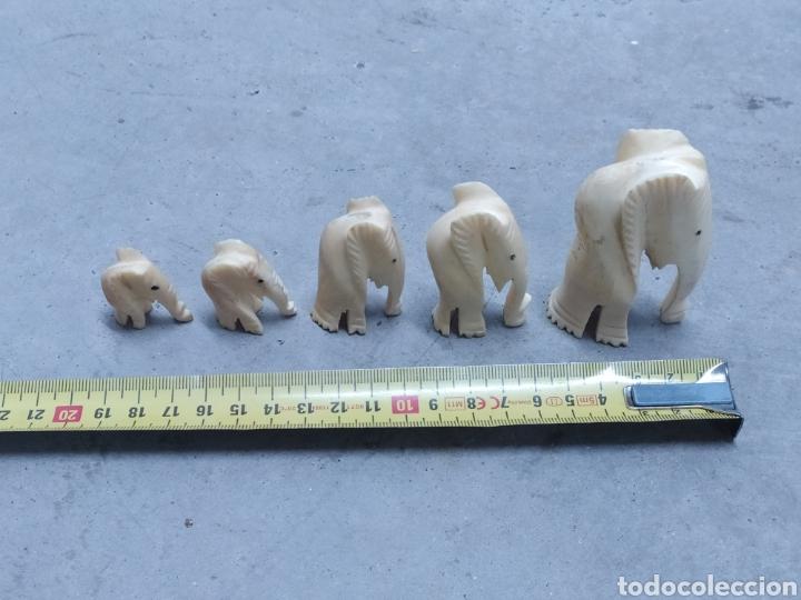 Arte: Conjunto de 5 elefantes tallados en Marfil. Años 60 - Foto 7 - 232878380