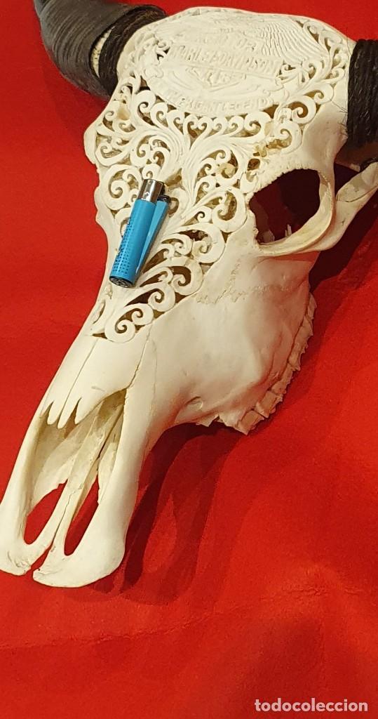 Arte: Impresionante calavera de bufalo muy grande, xxl - Foto 9 - 161318158