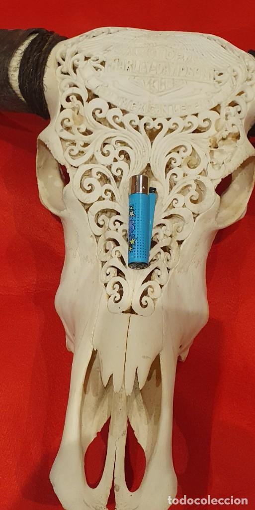 Arte: Impresionante calavera de bufalo muy grande, xxl - Foto 10 - 161318158