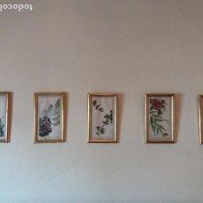 Arte: ARTE JAPONÉS O CHINO. 5 CUADROS PINTADOS A MANO SOBRE SEDA. FIRMADOS, CON MARCO Y CRISTAL. AÑOS 50. Lote 101163216