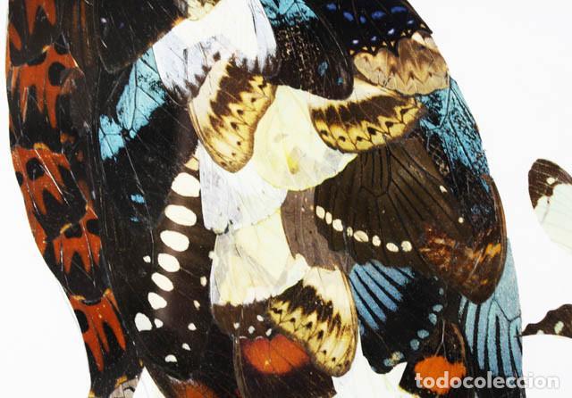 Arte: CURIOSO CUADRO CON ALAS DE MARIPOSA CON MARCO (CON CRISTAL) CONGO 2002 55,00 X 45,00 CM LAMINA - Foto 3 - 102322587