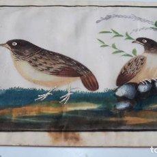 Arte: DIBUJO FIGURA AVES PÁJAROS TEMPERA O ACUARELA SOBRE PAPEL DE SEDA O ARROZ CHINA, ASIA SIGLO XIX. Lote 117799115