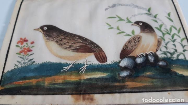Arte: Dibujo figura aves pájaros tempera o acuarela sobre papel de seda o arroz China, Asia siglo XIX - Foto 4 - 117799115