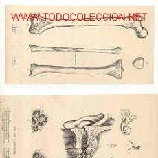 grab.antig.1888 CUERPO HUMANO