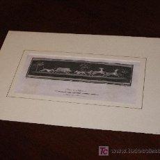 Arte: GRABADO CALCOGRAFICO NAPOLES C.1775. Lote 10294641